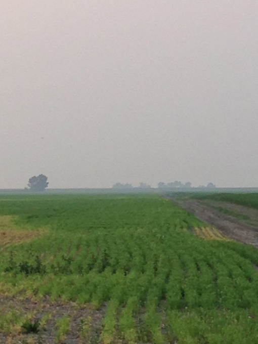 Our smokey farm.